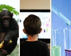 From chimps, to television, to clinical trials, there was plenty to read on our blogs in January.