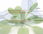 CRISPRimage-580x342