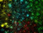 online-visualisation-620x342