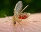 sandfly-title-picture-620x342