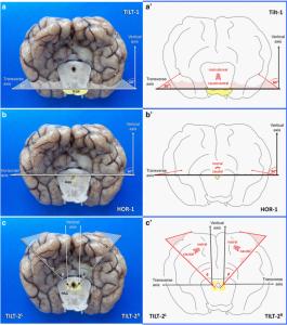 Matiasek et al. - Figure 6 - https://0-www-biomedcentral-com.brum.beds.ac.uk/1746-6148/11/216