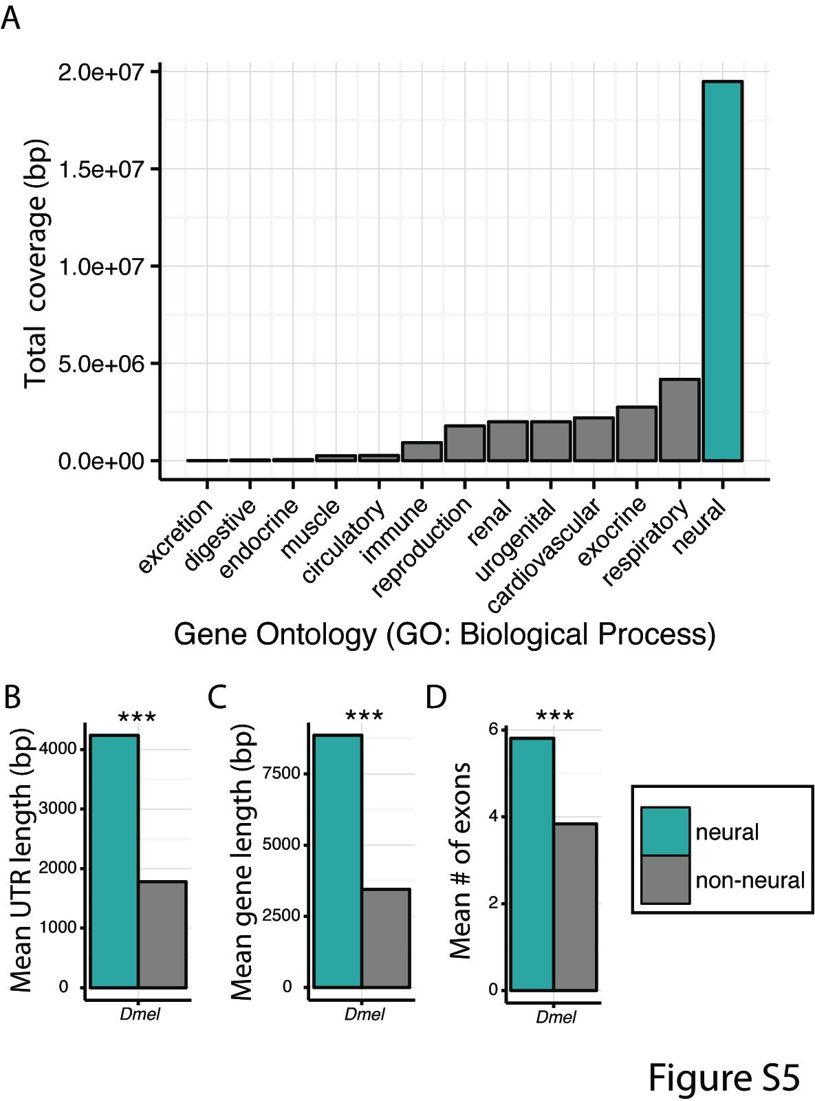 Large mutational target on neurogenetic genes may promote rapid behavioral change