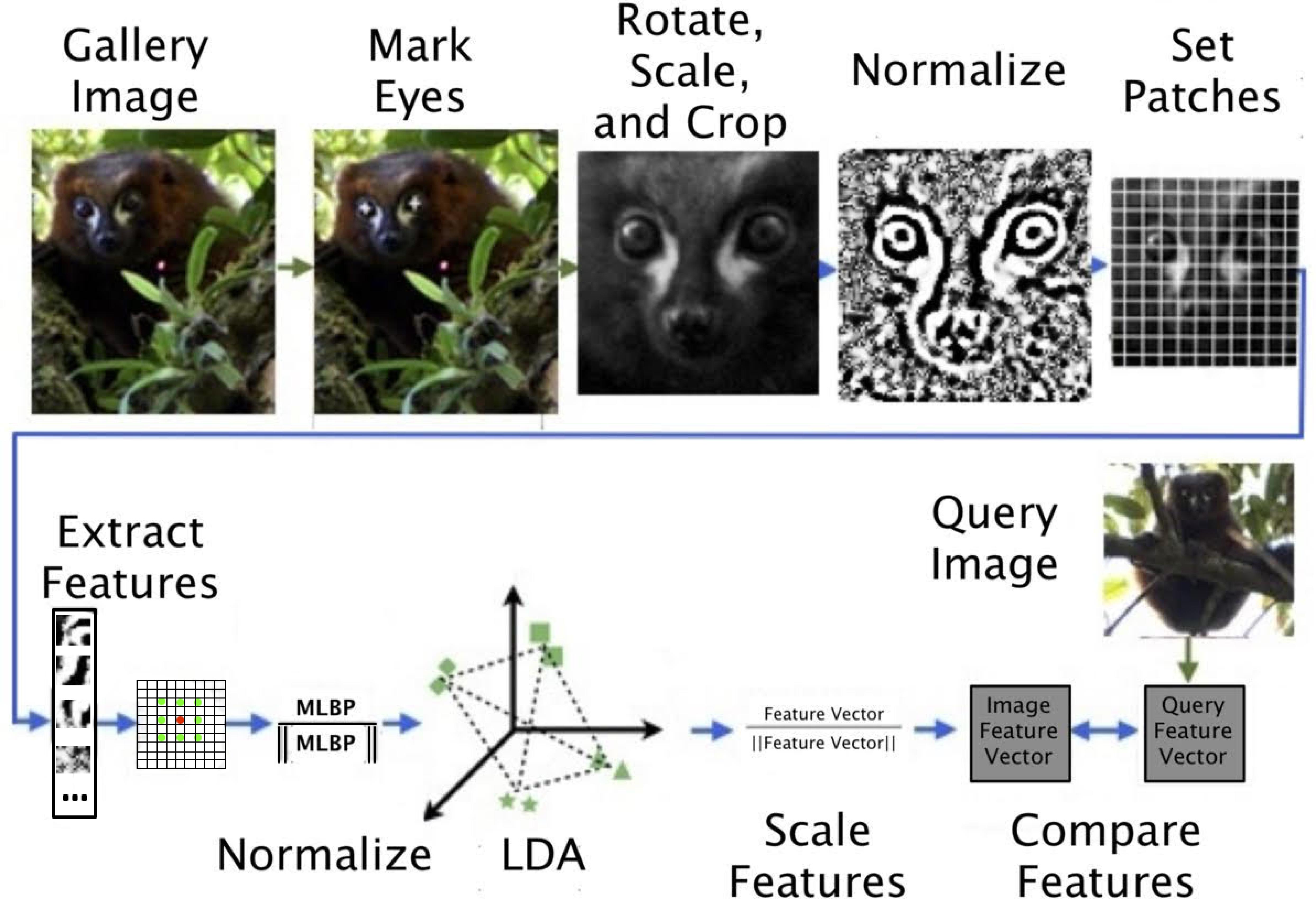 Flowchart of how LemurFaceID works.