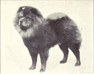 Chow-Chow_from_1915