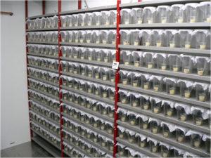 Hundreds of beakers for observation