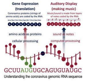 Temple, M.D. Real-time audio and visual display of the Coronavirus genome. BMC Bioinformatics 21, 431 (2020)