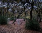 Photograph showing a shadowy woodland scene with autumn leaves covering the ground