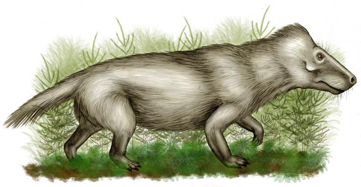 Mid- Triassic Cynodont (wikicommons)