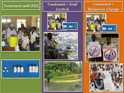 The ZEST study design – Three intervention arms; 1. Treatment with PZQ 2. Treatment with PZQ plus Snail control with niclosamide 3. Treatment with PZQ plus behaviour change and community engagement – image copyright NHM