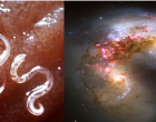 Roundworm or galaxy?