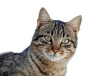 File-cat-march-2010-1-jpg-wikimedia-commons