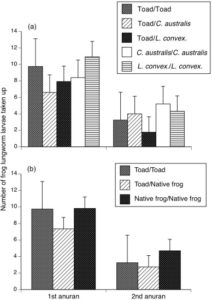 Effect of order of exposure and type of anuran species (native frog versus cane toad) on the number of frog lungworm taken up. Source: Nelson et al., 2015