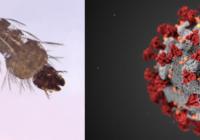 malaria covid-19