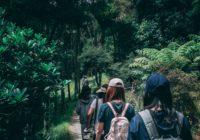 people-wearing-backpacks-walking-on-pathway-near-green-leaf-917510