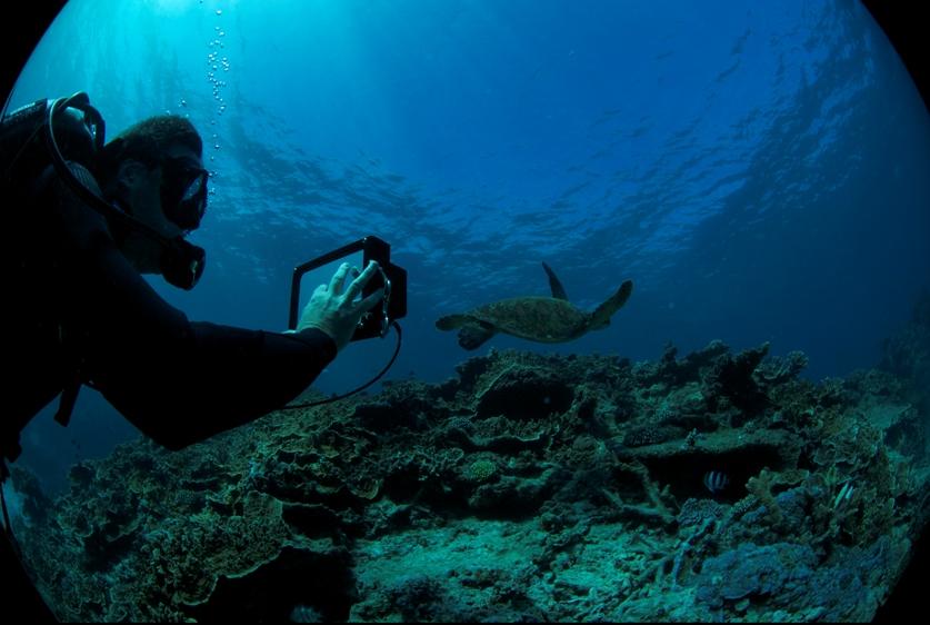Green turtle on Heron Island, filmed on a tablet camera