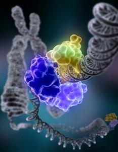 repaired chromosome