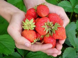 Holding strawberries