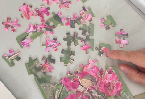 Assembling the Bauhinia genome will be a bit like a jigsaw puzzle