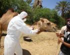Coronaviruses; Middle East Respiratory Syndrome Coronavirus (MERS-CoV)