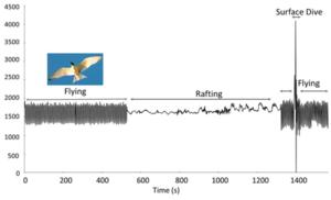 accelerometer-waveform