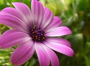 purple-flower-1378227891t6b