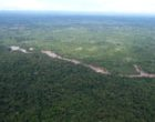 Aerial vew of green african forest liberia