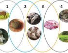 African Swine Fever Wild Boar Epidemiology Cycle