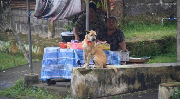 dog in Bali