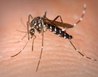 Climate experts and their work on the Zika outbreak