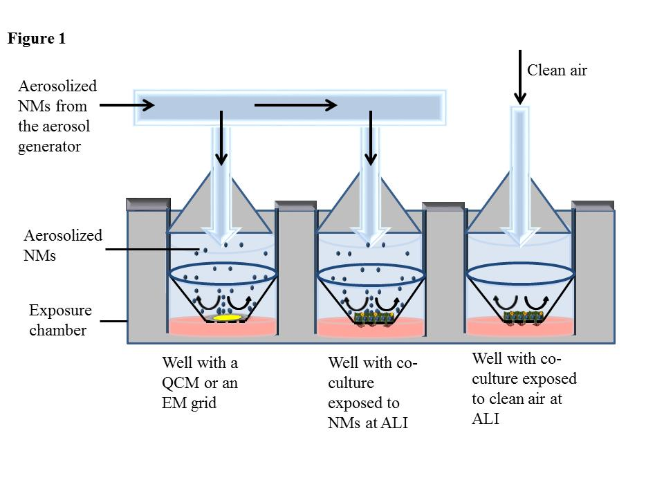 Exposing cells to aerosolized substances at the ALI requires integration of an aerosol generator with an exposure chamber to simulate realistic exposure scenarios.