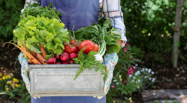 Woman holding crate full of freshly harvested vegetables.