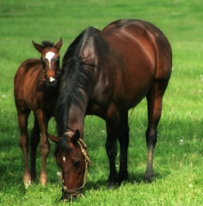 iStockphoto image of horse and foal