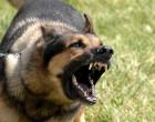 800px-Military_dog_barking