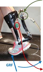 Illustration of the ankle exoskeleton.