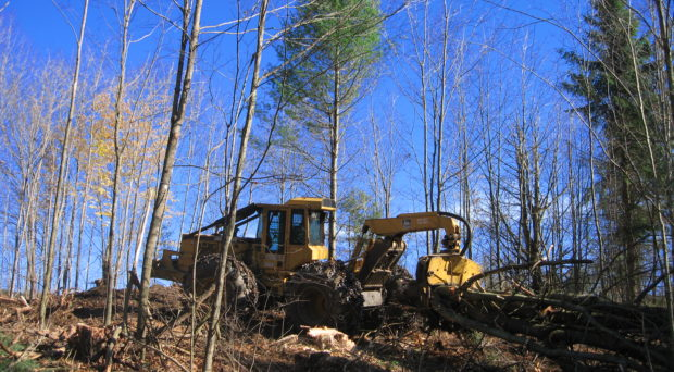 A yellow digger is at work in a forest